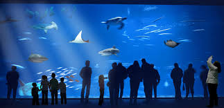 Monterey Bay Acquarium